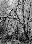 A heart of darkness... by thewolfcreek