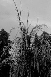 Frozen in time... by thewolfcreek