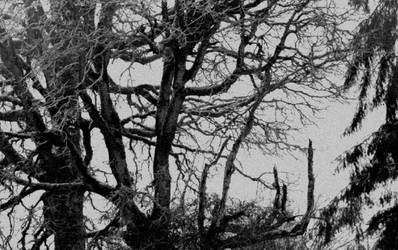 Of dark solitude... by thewolfcreek