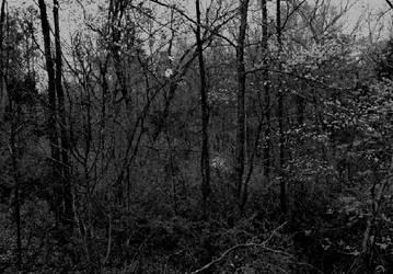 Secluded... by thewolfcreek