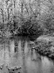 Cold dark waters... by thewolfcreek