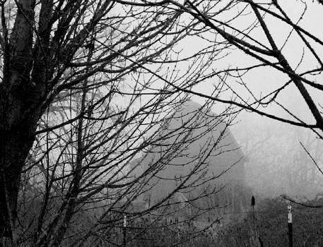 Hidden in the mist...