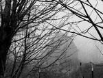 Hidden in the mist... by thewolfcreek