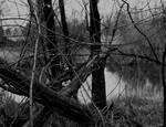 A grim season... by thewolfcreek