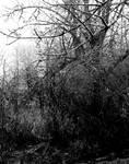Of gloom and fog... by thewolfcreek