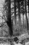 Mystic silence... by thewolfcreek