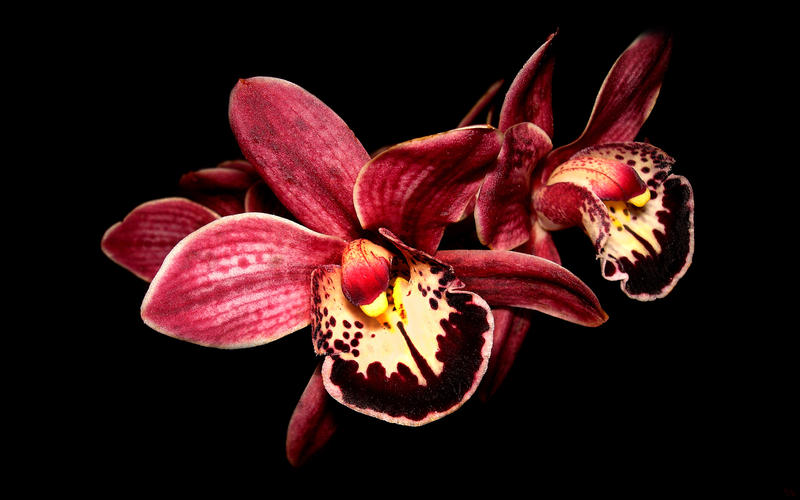 orchid wallpaper. orchid wallpaper by