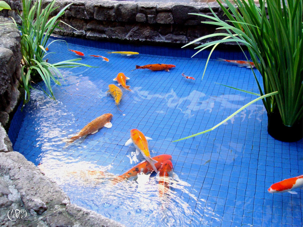 Koi pond 02 by fake6pack on deviantart for Blue koi pond liner