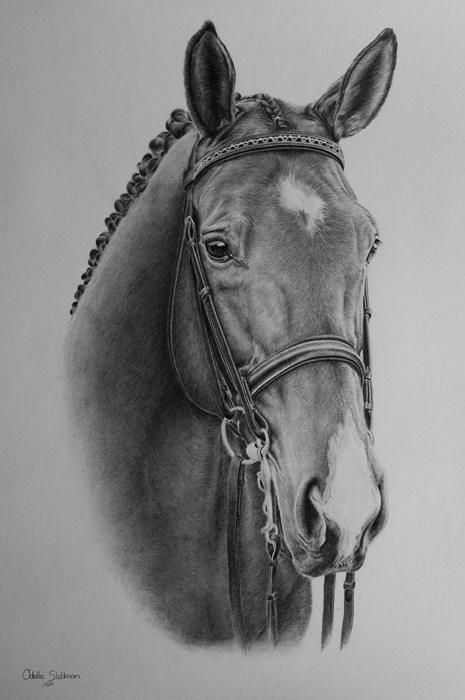 Horse graphite commission by Odette1994