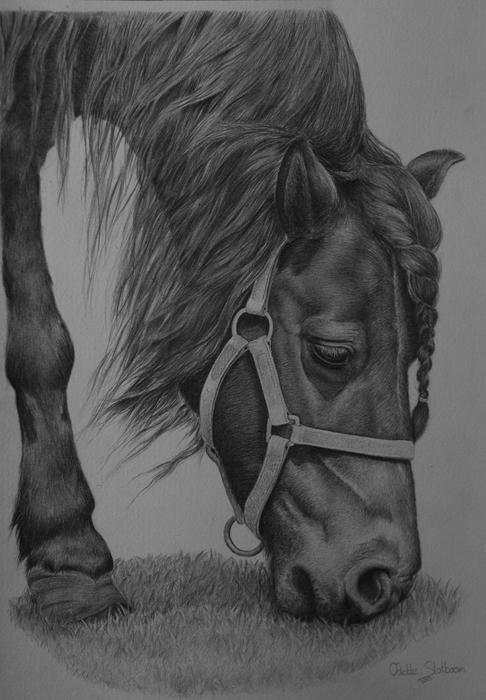 Commission shetland pony by Odette1994