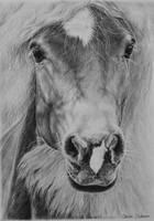 Haflinger horse commission by Odette1994