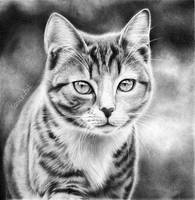 Cat by Odette1994