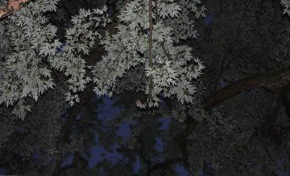 Trees by bassplayinninja