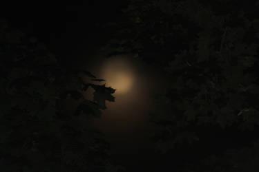 Night Time Leaves by bassplayinninja