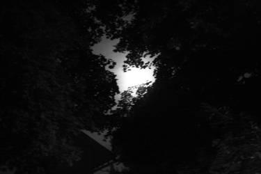 When Night becomes Day by bassplayinninja