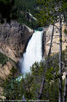 Yellowstone Falls by rjakobson