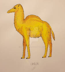 Camelops/Yesterday's Camel 05/03/19