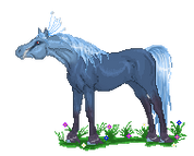 My Bird Horse animation by Dollyrawr