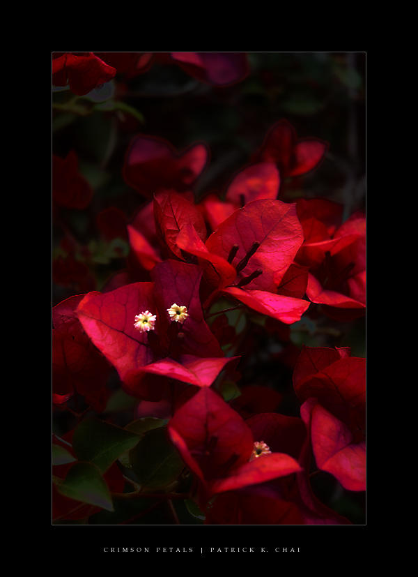 Crimson Petals by eggwacker