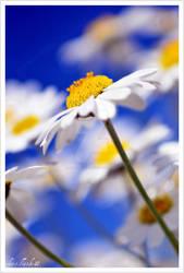sunny day3 by photoflacky