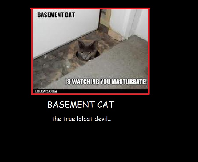 basement cat is watching you basement cat is watching