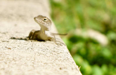 gecko. by lycheese