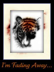 Tiger Tiger Burning Bright by nakhoda