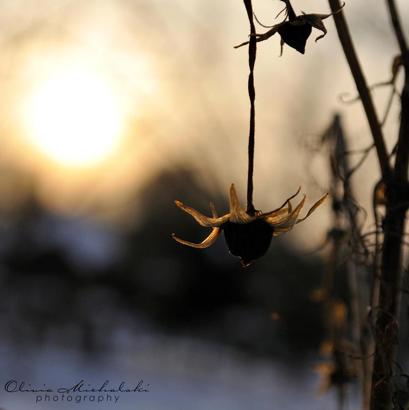 Gone. by OliviaMichalski