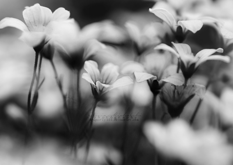 18.52 - Fairytales. by OliviaMichalski
