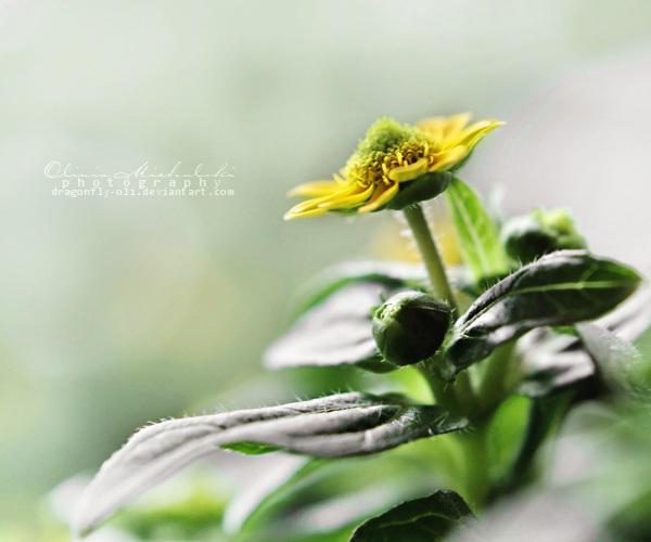 19.52 - Dreams come true. by dragonfly-oli
