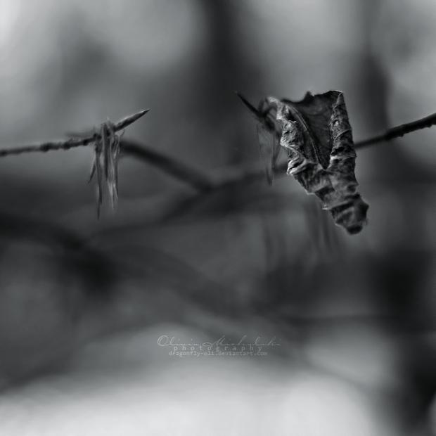 Cradles. by OliviaMichalski
