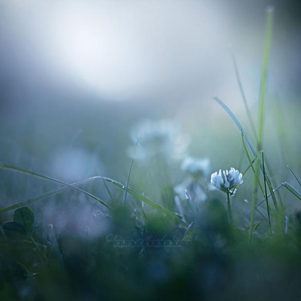 Cold foggy feelings. by dragonfly-oli