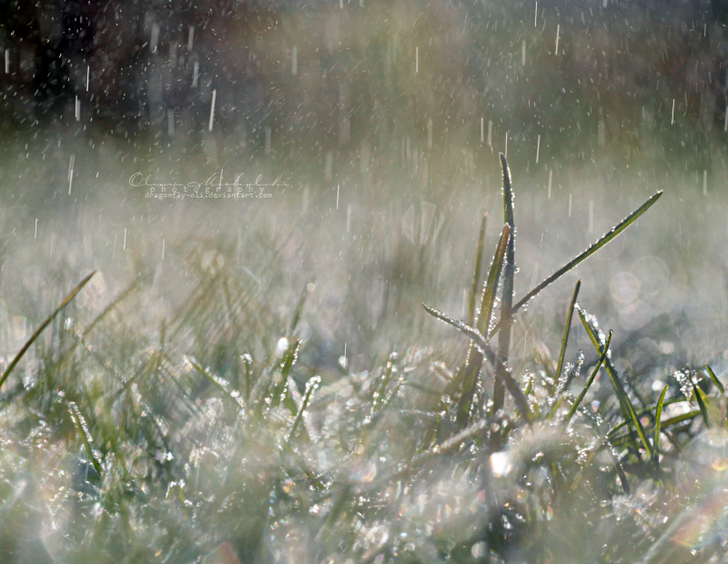 Spring rain. IV by dragonfly-oli