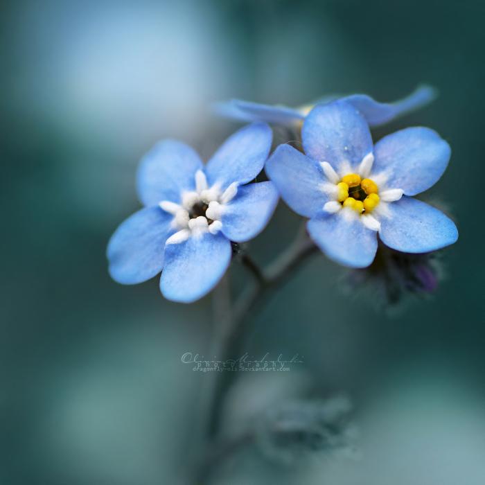I won't forget you. by OliviaMichalski
