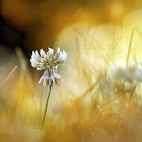 Golden times. by OliviaMichalski