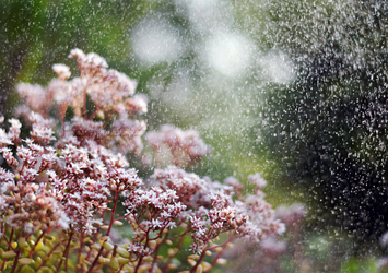 Feel the wind, feel the rain. by OliviaMichalski
