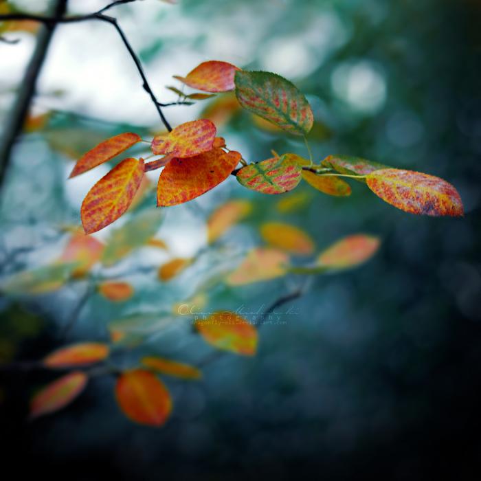 The cold season has begun. by OliviaMichalski