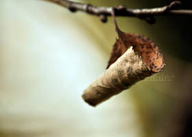 Withered Cradle. II by OliviaMichalski