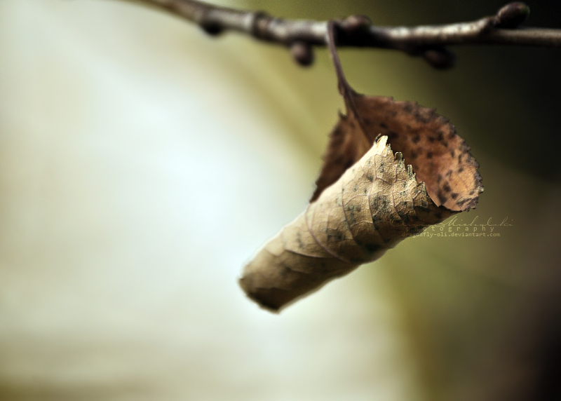 Withered Cradle. II by dragonfly-oli