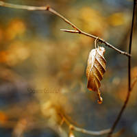 The wind is golden. by OliviaMichalski