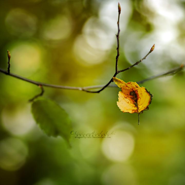 Autumn in my mind. by dragonfly-oli