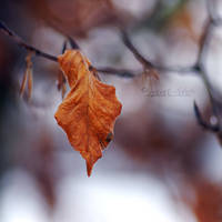 The Lonely Leaf.