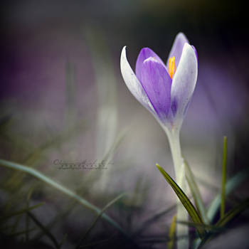 Spring herold. by OliviaMichalski