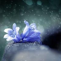 Singing in the Rain. by OliviaMichalski