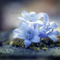 Stars in Spring. by OliviaMichalski