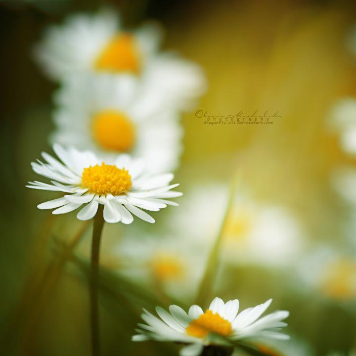 Summer Breeze. by dragonfly-oli