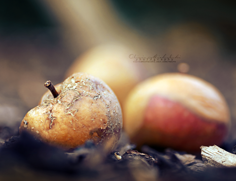 An Apple a day.. by OliviaMichalski