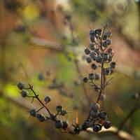 Autumn's flowers. by OliviaMichalski