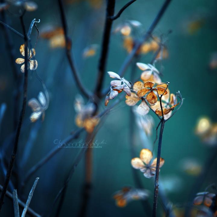 Embrace. by OliviaMichalski