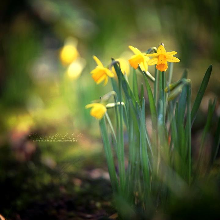 Happy Spring. by OliviaMichalski